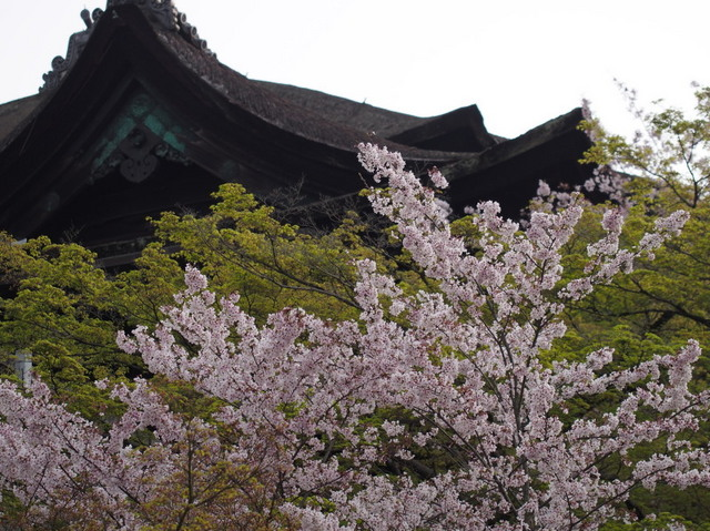 kiyomizu01b.jpg