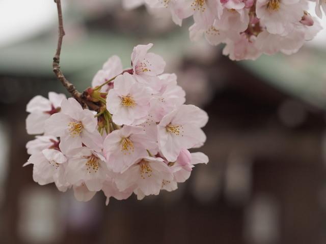 yoshi01b.jpg