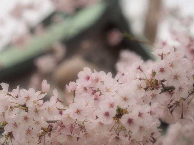 yoshi02b.jpg