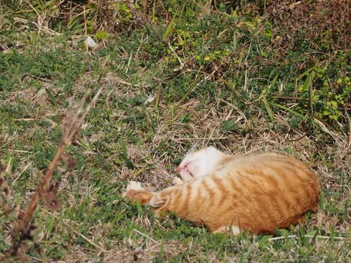 足摺の猫.jpg