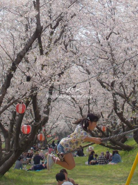 b桜.jpg